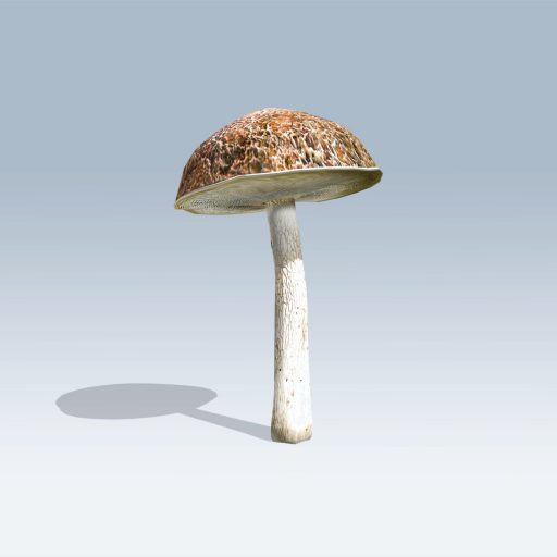 Bolete Mushroom (v6) 1