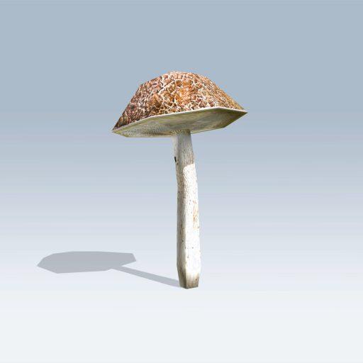Bolete Mushroom (v6) 4