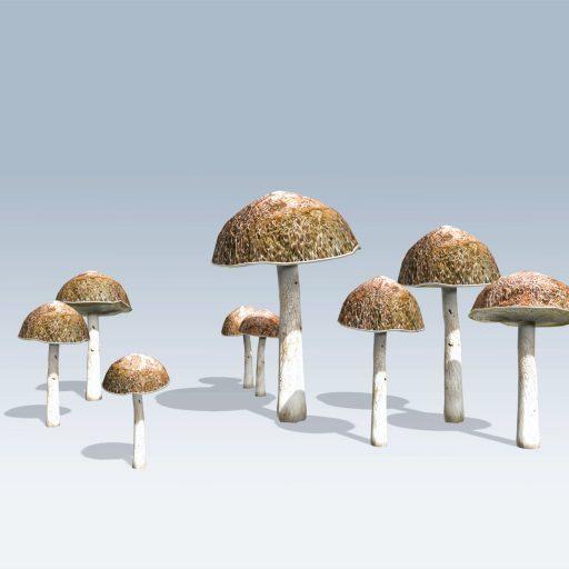 Bolete Mushroom (v6) 2