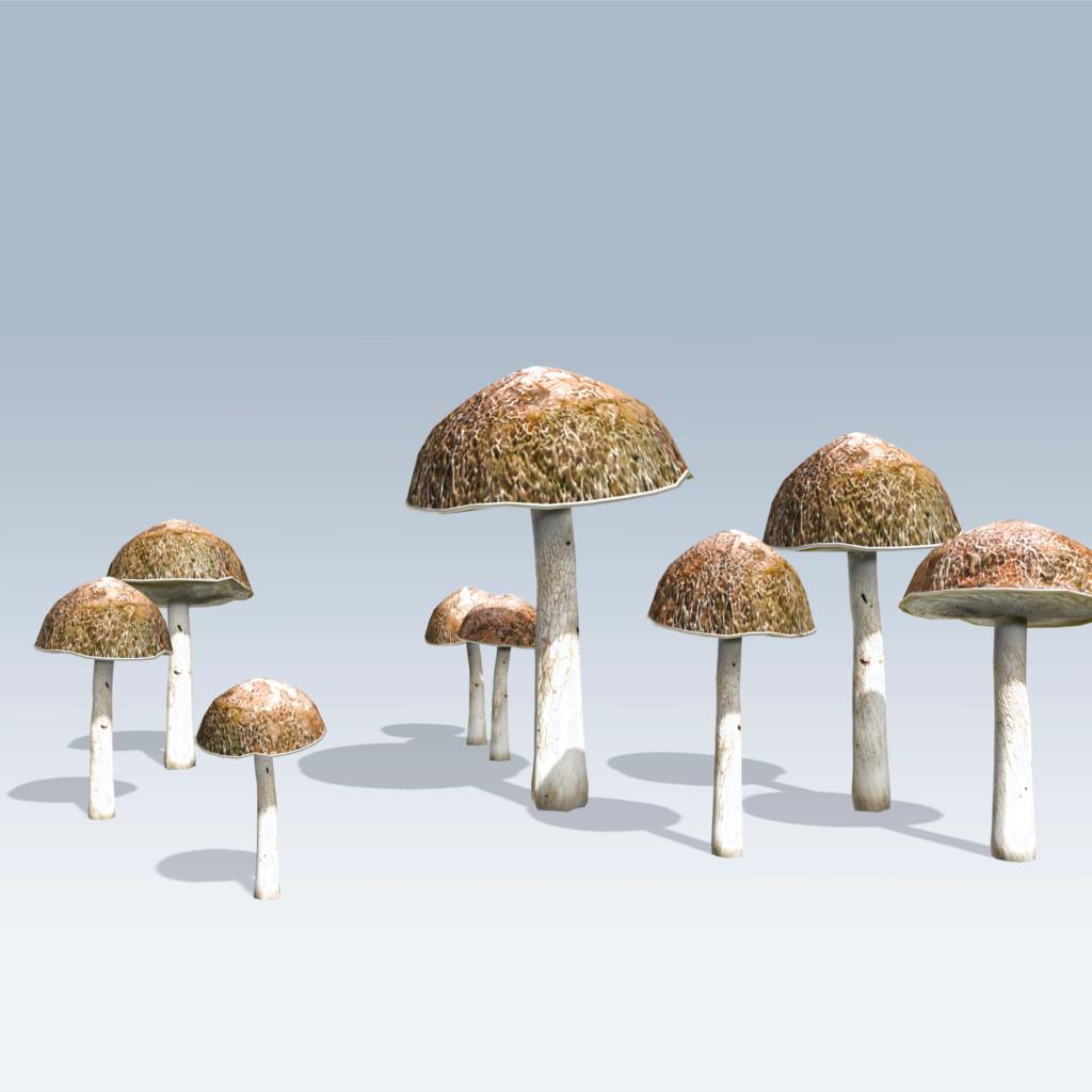 Bolete Mushroom (v6)