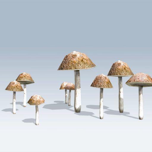Bolete Mushroom (v6) 3