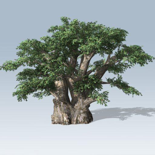 African_Baobab_Hero_1