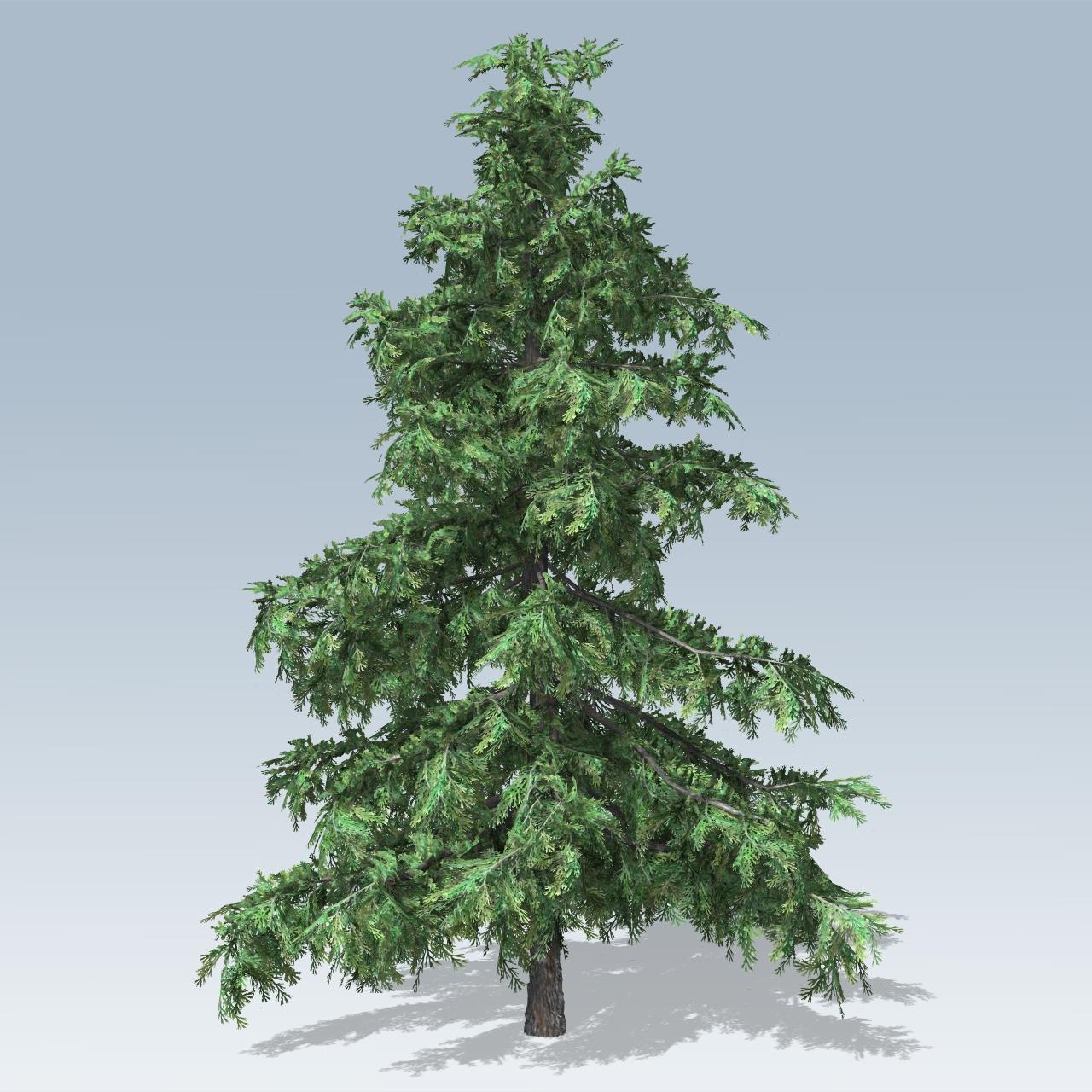 Small Cedar Varieties ~ Alaska cedar v speedtree
