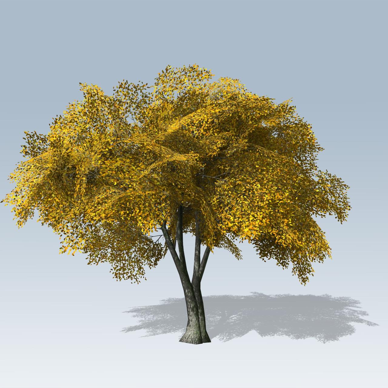 American elm vfx speedtree store for American elm
