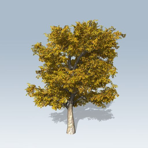 American_Sycamore_Hero_Fall