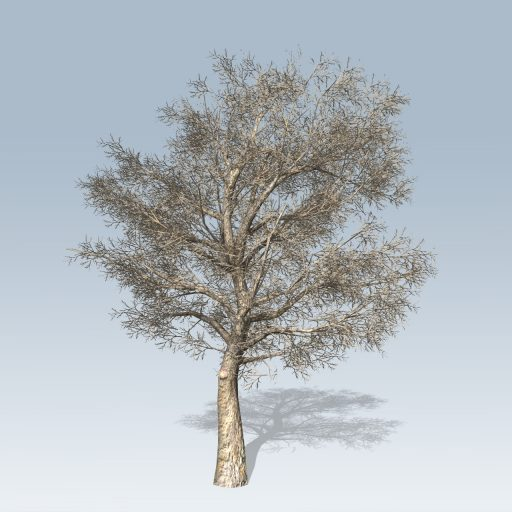 American_Sycamore_Hero_Winter
