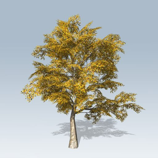 American_Sycamore_Mobile_Fall