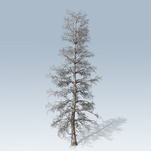 Blue_Spruce_Desktop_Bare