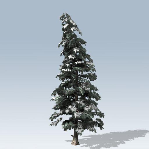 Blue_Spruce_Desktop_Winter