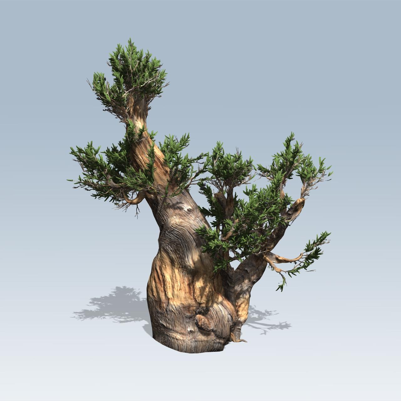 Bristlecone Pine (v7) – SpeedTree
