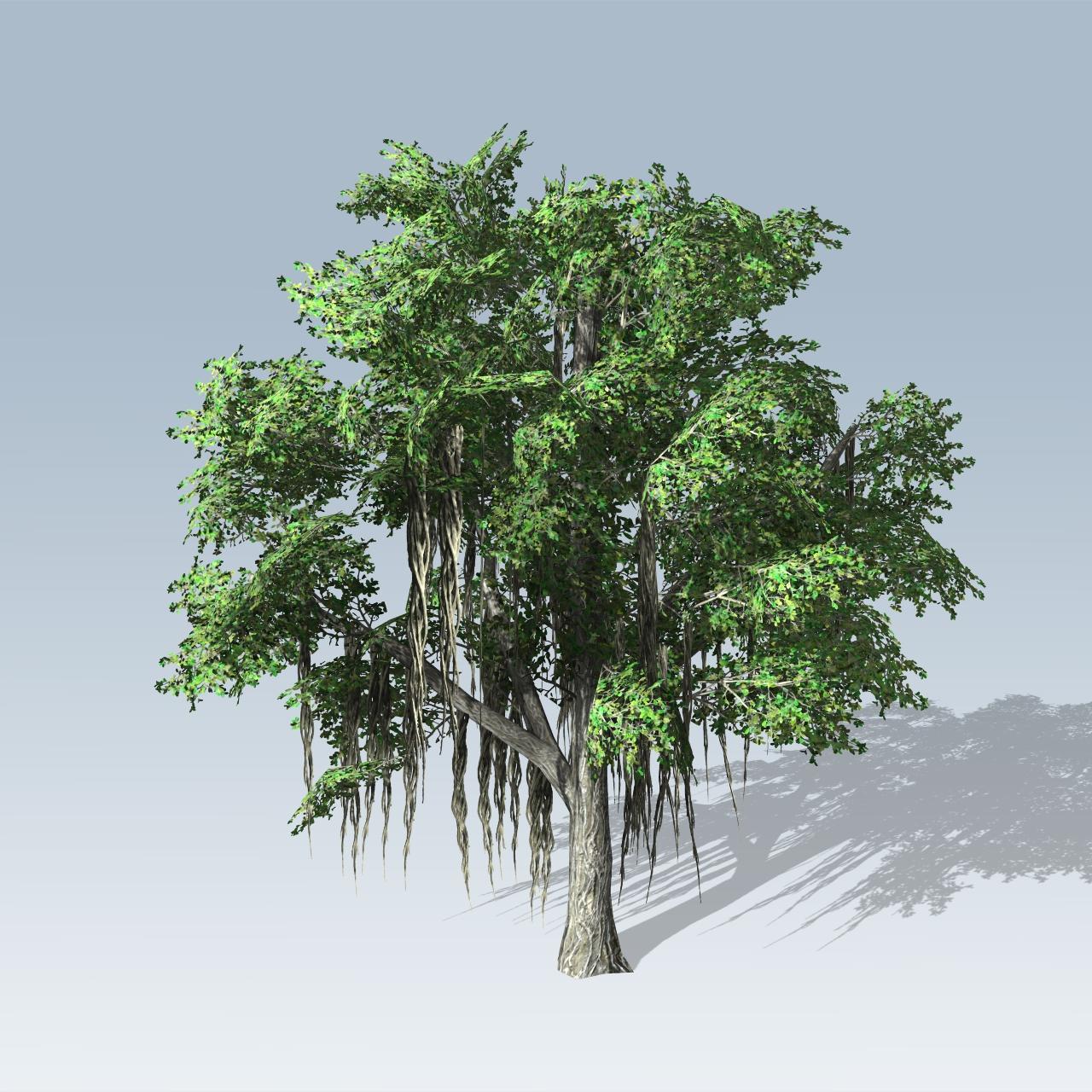 chinese banyan  speedtree