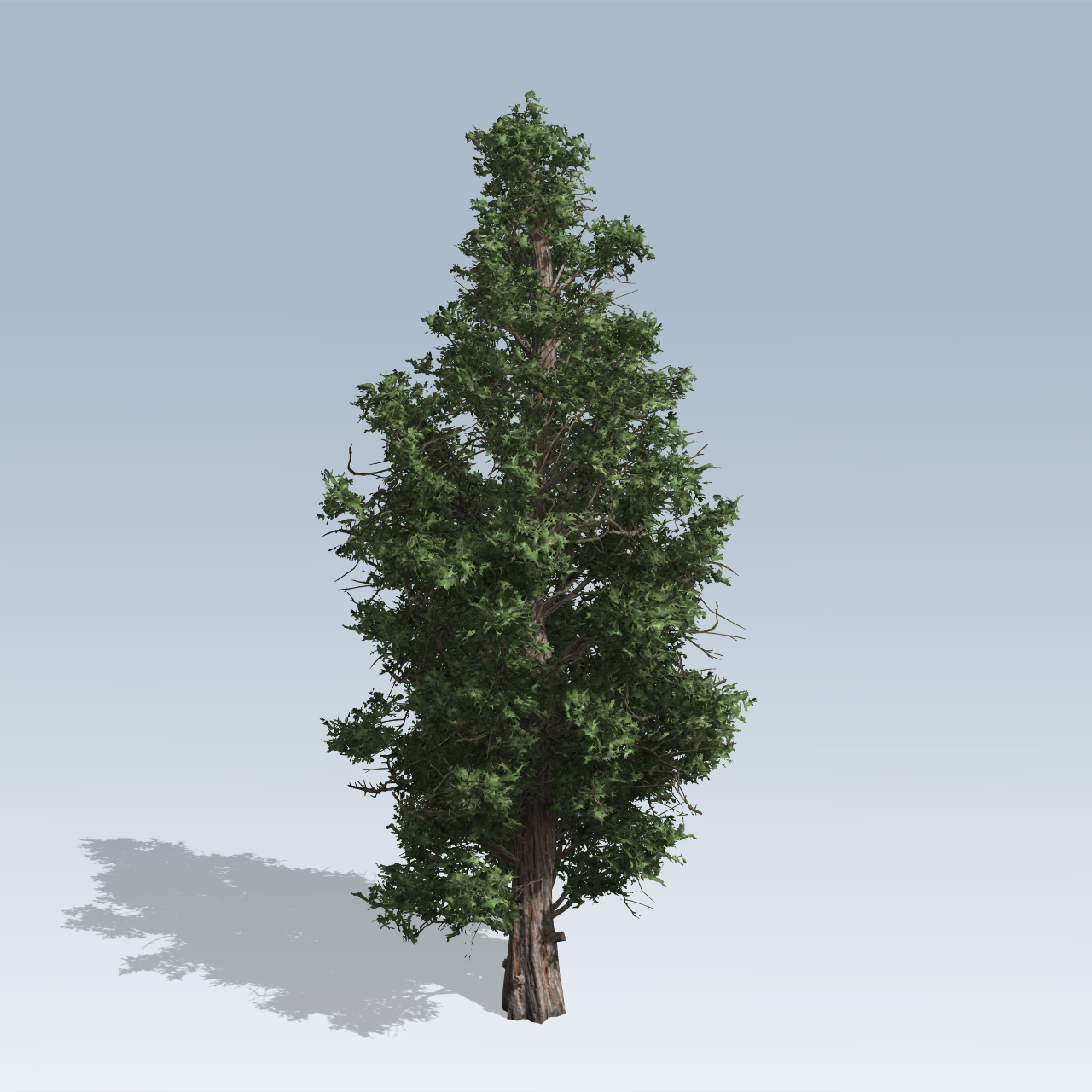Eastern red cedar v speedtree