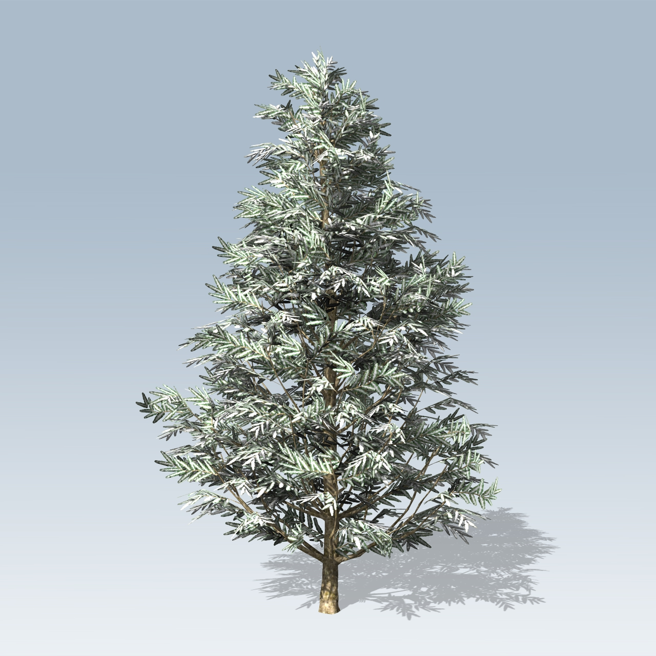 fraser fir Buy fraser fir tree seeds online free shipping on orders over $75 shop for over 500 species of tree and shrub seeds for sale click or call (802) 363-1582 to.