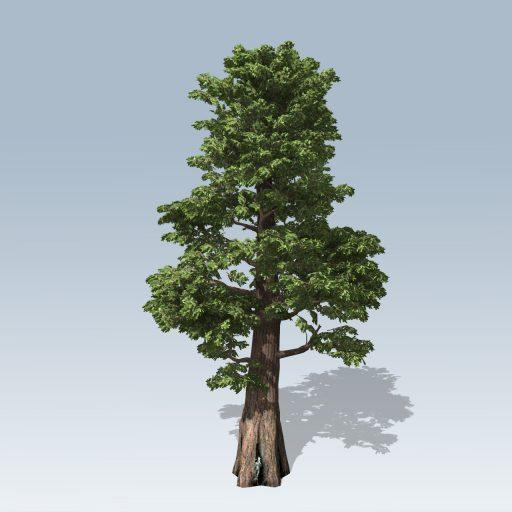 Giant_Redwood_Desktop_2