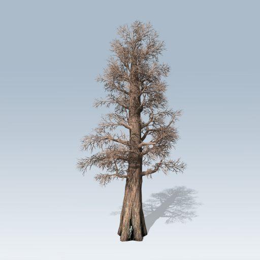 Giant_Redwood_Desktop_Bare
