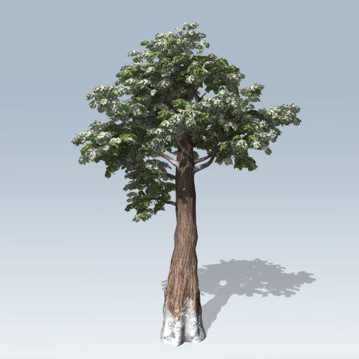 Giant_Redwood_Desktop_Winter