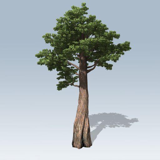 Giant_Redwood_Hero_1