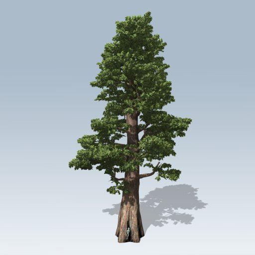 Giant_Redwood_Hero_2