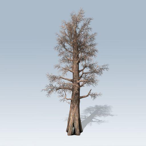 Giant_Redwood_Hero_Bare