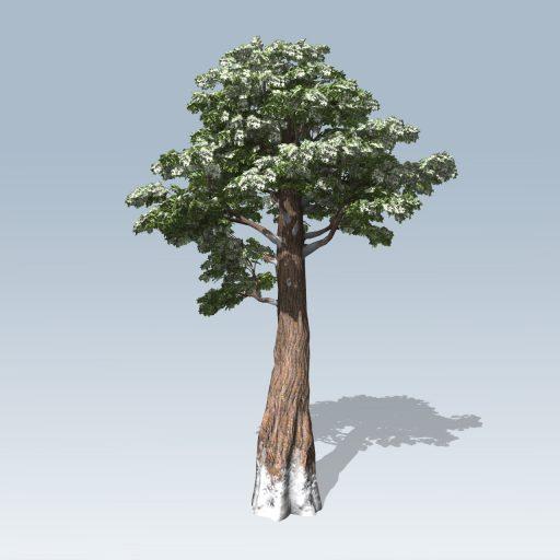 Giant_Redwood_Hero_Winter_1