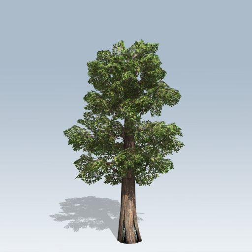 Giant_Redwood_Mobile_2