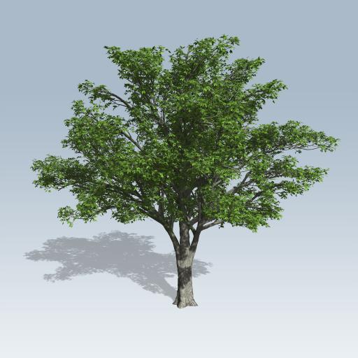 American elm speedtree store for American elm
