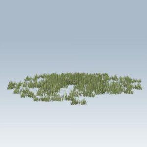 Plantation Grasses