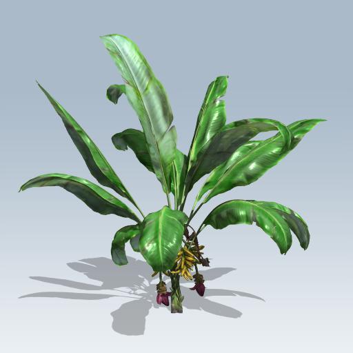 Banana Plant 1