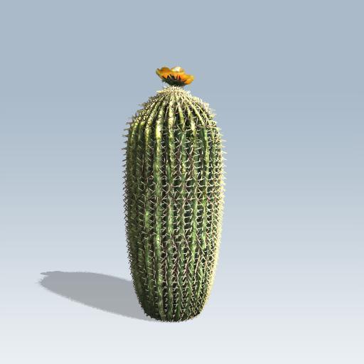 Barrel Cactus 1
