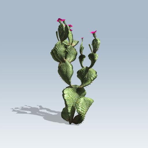 Beavertail Cactus 1