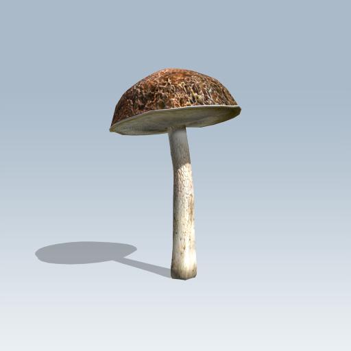 Bolete Mushroom 1