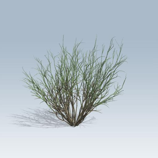 Broom Snakeweed 1
