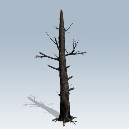 Burnt Tree 1