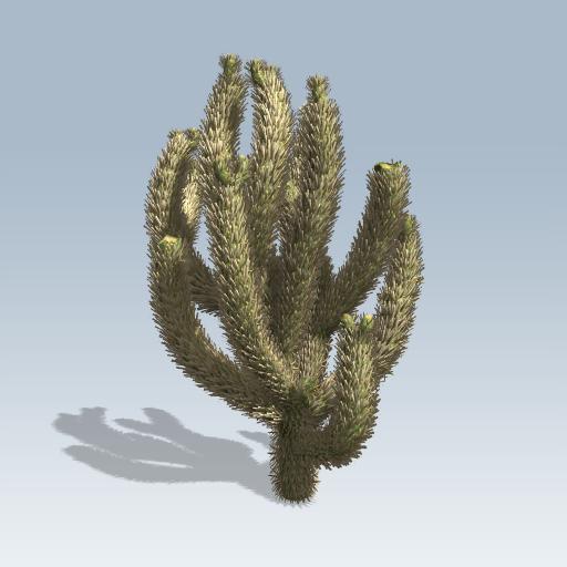 cholla cactus  speedtree