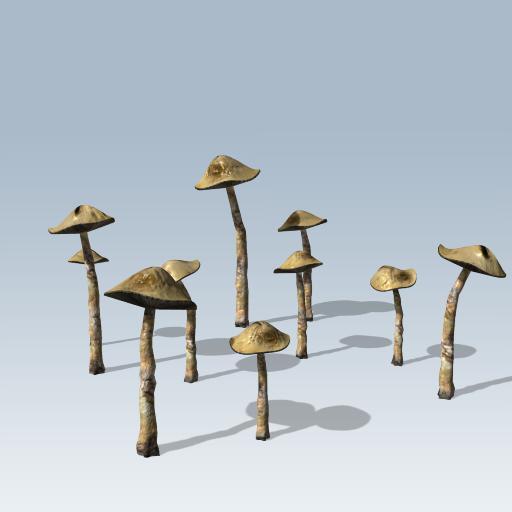 Common Mushroom 1