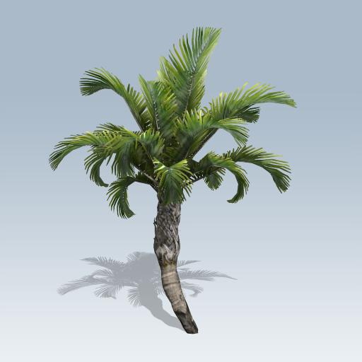 Curly Palm 3