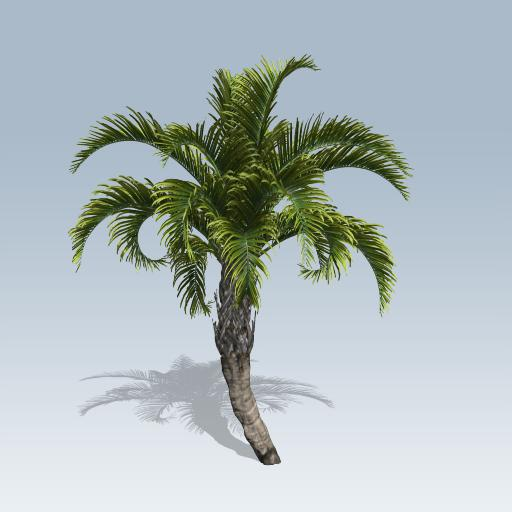 Curly Palm 1