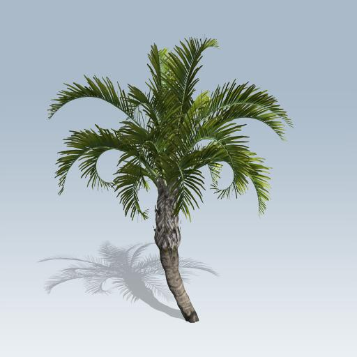 Curly Palm
