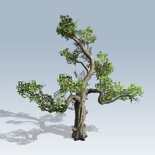Honey Tree