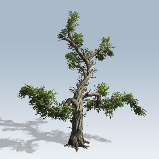 Honey Tree 1