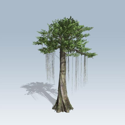 how to draw a kapok tree