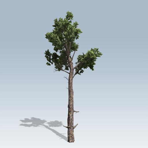 loblolly pine $ 49 00 add to cart sku loblolly pine category conifers