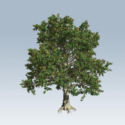 Southern Magnolia v7  SpeedTree