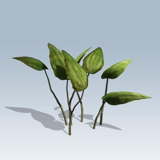 Sword Plant 1