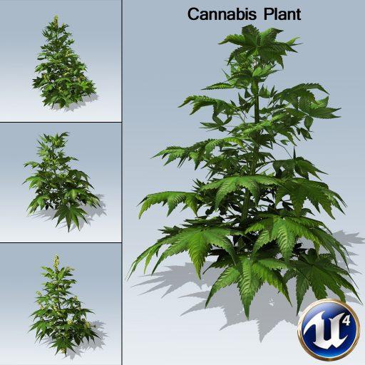cannabis_version_3panes