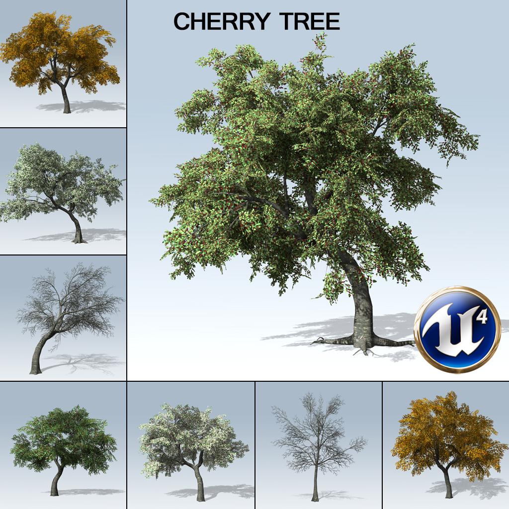 Cherry Tree (UE4) - SpeedTree