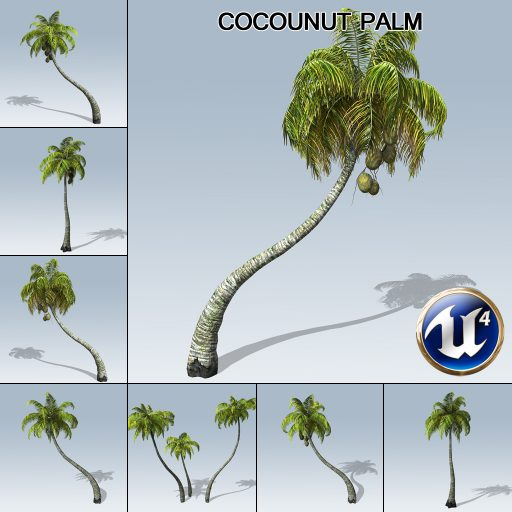 coconut_palm_product_with_7_variations