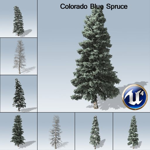 colorado_blue_spruce_product_with_7_variations