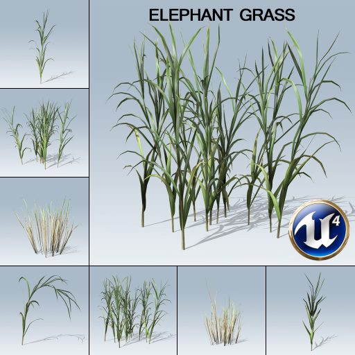 elephant_grass_product_with_7_variations