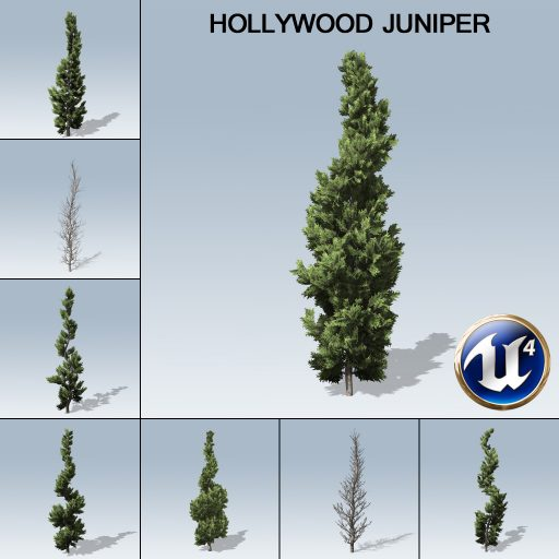 hollywood_juniper_product_with_7_variations